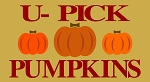 U- Pick Pumpkins