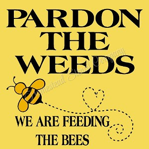 Pardon The Weeds We Are Feeding the Bees